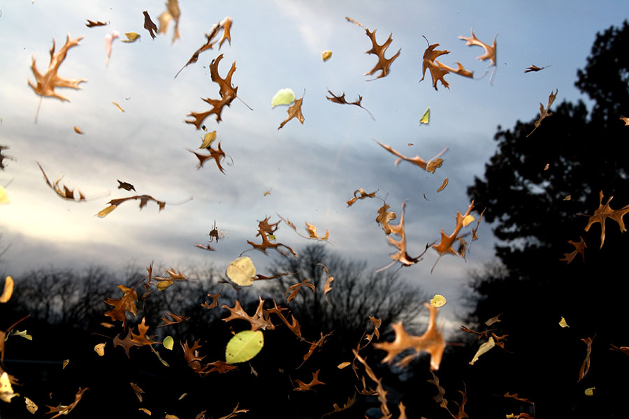 As the leaves fall, magic fills the air on Thanksgiving for the Douglass family.