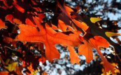 Fall break set for Oct. 11-14