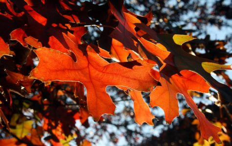 Fall break set for Oct. 11-14