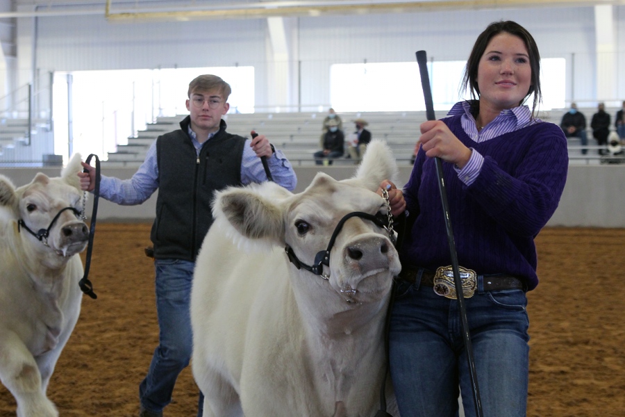 Seniors+Reid+Rousser+and+Raylee+Bain+show+off+their+cattle+during+the+steer+portion+of+the+Randall+County+Junior+Livestock+Show+Monday%2C+Jan.+18.+Rousser+has+shown+steer+for+over+a+year+and+said+the+county+show+is+more+laid+back+than+other+shows.+%E2%80%9CYou+want+to+catch+the+eye+of+the+judge+to+make+sure+he+gets+a+good+look+at+your+calf%2C+and+you+need+to+be+very+presentable%2C%E2%80%9D+Rousser+said.+%E2%80%9CThe+end+goal+is+to+be+at+the+top+of+your+class.+Your+calf+needs+to+be+smooth+on+the+walk.+He+needs+to+look+good+from+his+profile+and+from+the+back.%E2%80%9D