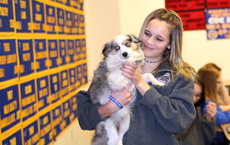 Veterinary med students joined by canine friends for class, competition