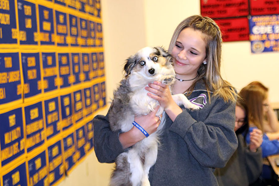 Sophomore Alissa Reeves cuddles with one of her canine classmates in veterinary medicine class.