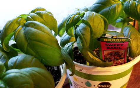 PTSA plant fundraiser 'Grow Your Oxygen' to begin April 20
