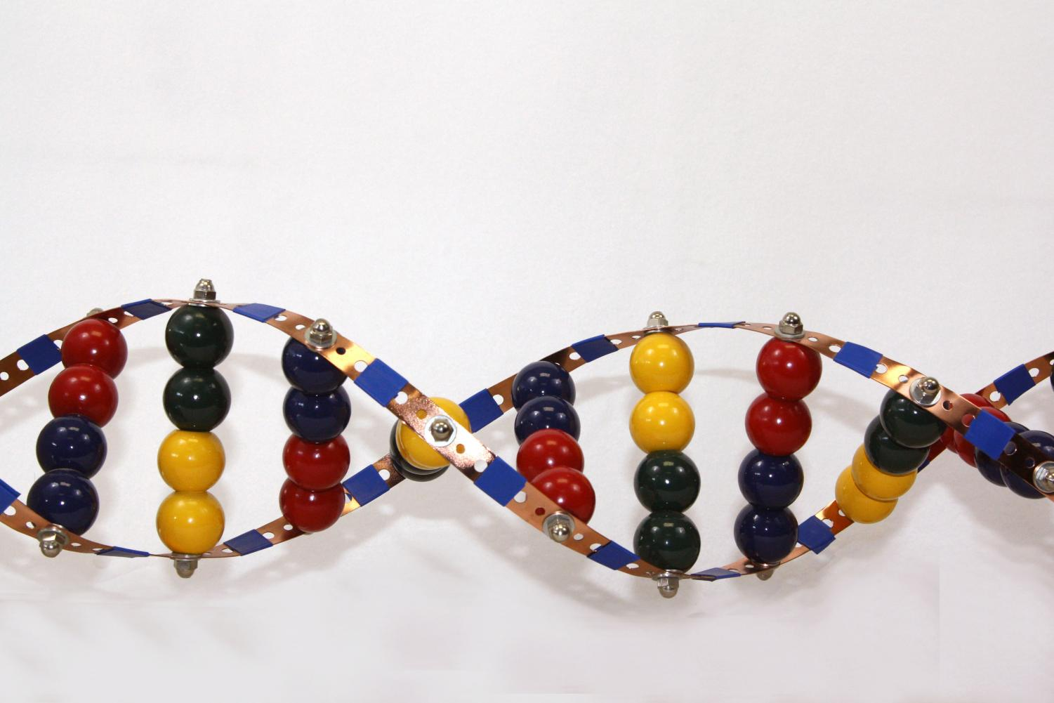 This DNA model was created by graduate Sammy Huseman as student in Cortney Shaller's class.