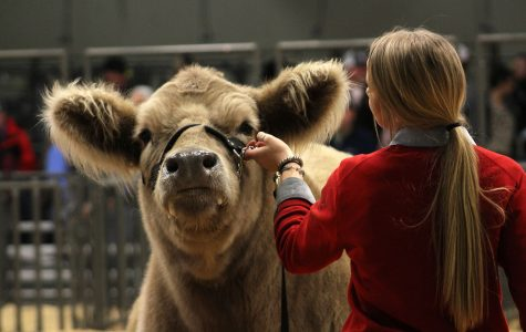 Students compete in Randall County Junior Livestock Show